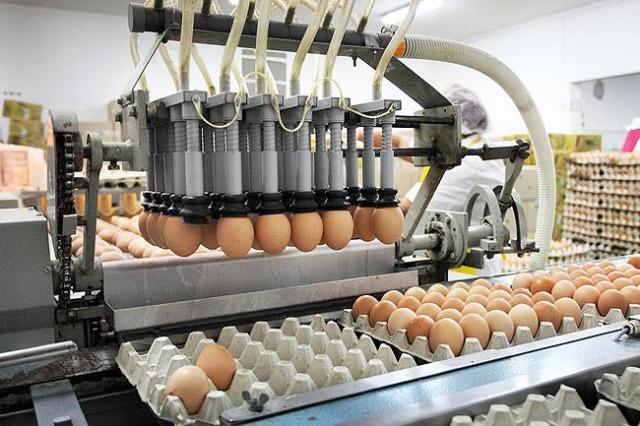 Sprzedaż sortownic do jaj