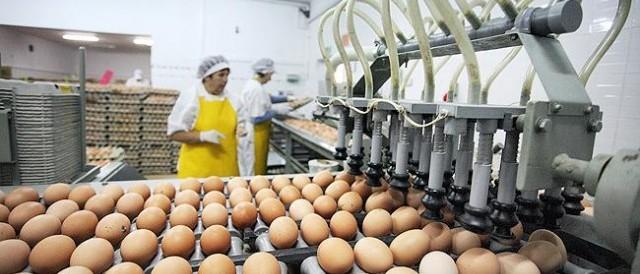 Naprawa sortownic do jaj